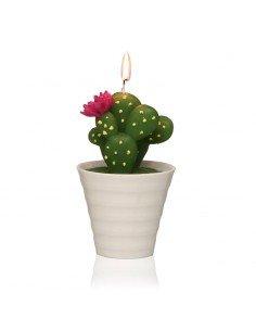 Vela Cactus Maceta